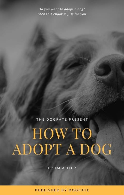 how to adopt a dog