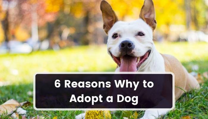 reasons why to adopt a dog